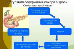 Схема регуляции содержания сахара в крови