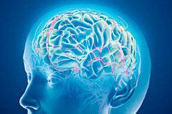 Алкоголь - вред головному мозгу