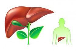 Восстановление печени растительными препаратами