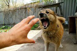 Обращение к врачу после укуса собаки