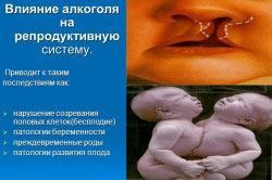 Репродуктивная система человека