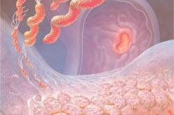 Противопоказание Аугментина при дисфункции печени