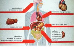 Негативное воздействие алкоголя на организм подростка