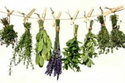 Сбор трав в лечении алкоголизма